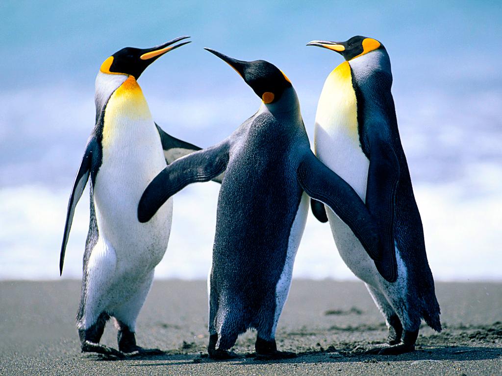 Los pinguinos patinadores